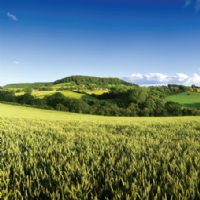 Market in Minutes: Agricultural Rent Survey