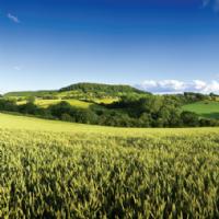Market in Minutes: Agricultural Rent Survey