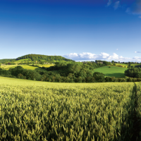 Market in Minutes: Agricultural Rent Survey 2015