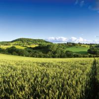 Market in Minutes: Agricultural Rent Survey 2015