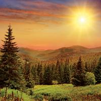 Spotlight: UK Forestry Market 2016